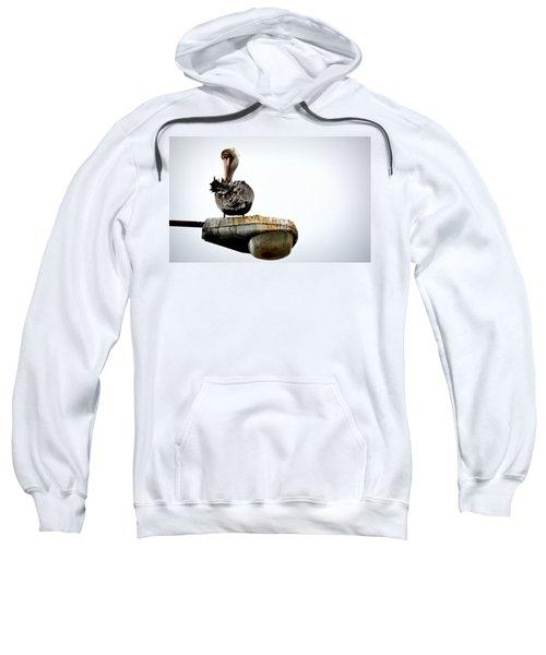 Grooming Time Sweatshirt