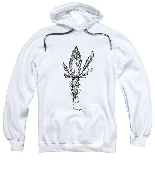 Hand Drawn Of Chicory Isolated On White Background Sweatshirt