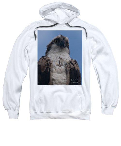 Hawk Stare Sweatshirt