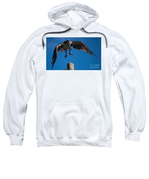 Hawk Taking Off Sweatshirt