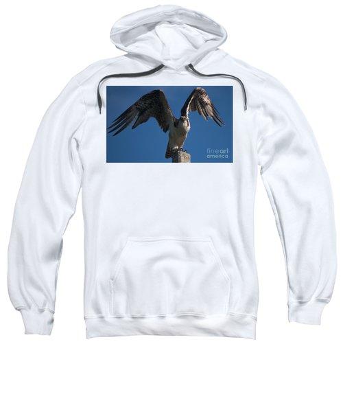 Hawk Wings Sweatshirt