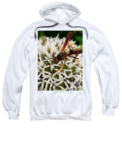 Hello, Wasp Sweatshirt