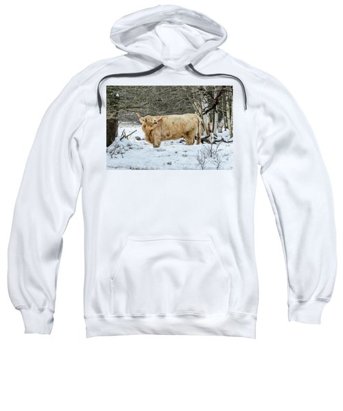 Highlander In Winter Sweatshirt
