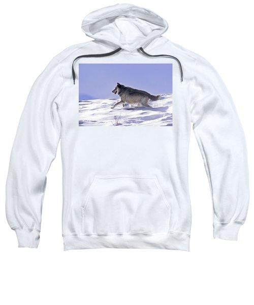 His Majesty Wolf 21m Sweatshirt