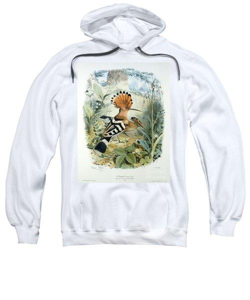 Hoopoe Sweatshirt