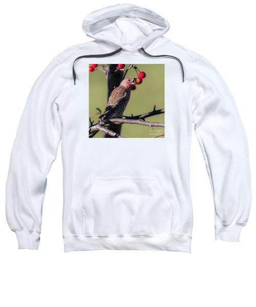 House Finch Vs Crabapple  Sweatshirt by Ricky L Jones