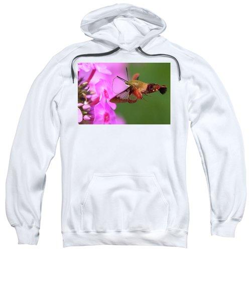 Hummingbird Moth Feeding 2 Sweatshirt