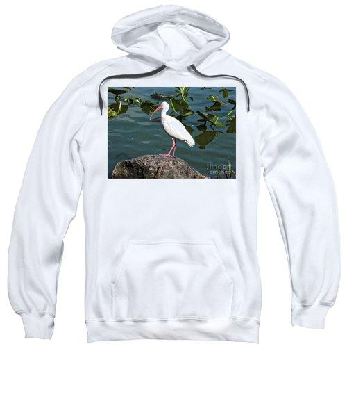 Ibis Rock Sweatshirt by Carol Groenen