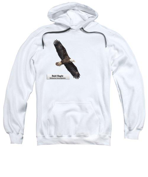 Isolated Bald Eagle 2018-1 Sweatshirt
