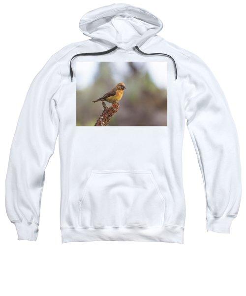 Juvenile Male Red Crossbill Sweatshirt