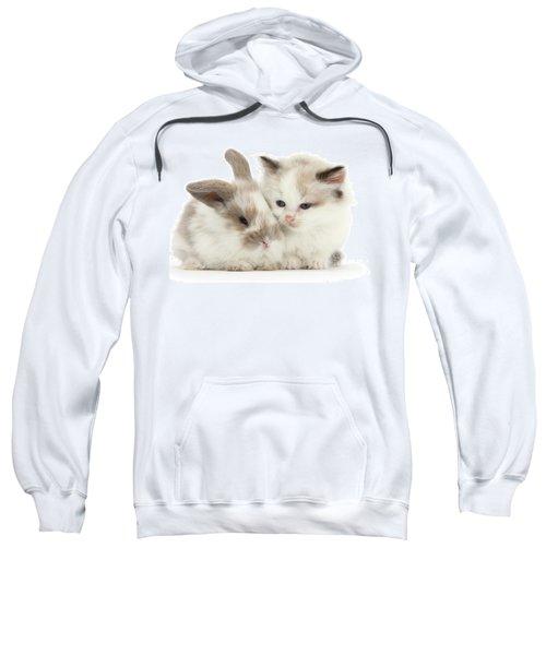 Kitten Cute Sweatshirt