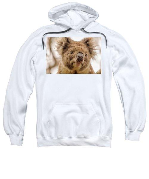 Koala 4 Sweatshirt