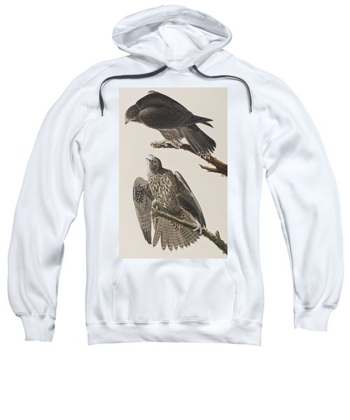 Labrador Falcon Sweatshirt by John James Audubon