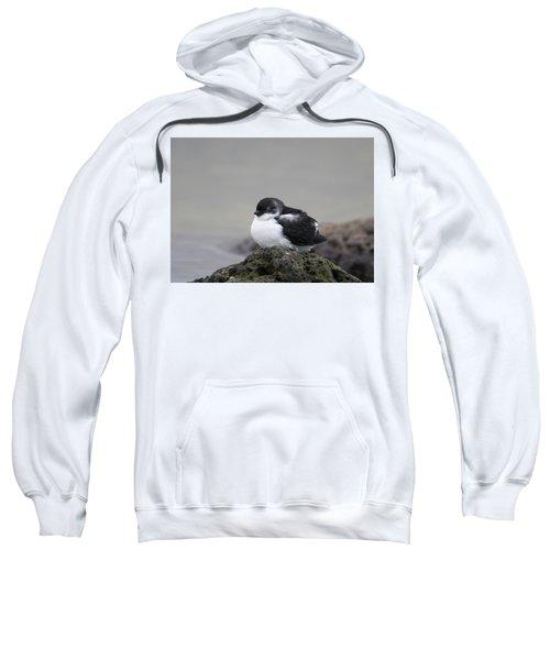 Least Auklet Sweatshirt