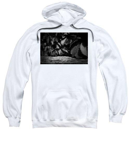 Leaves #9671 Sweatshirt