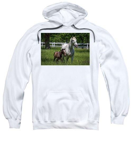 Lipizzan Horses Sweatshirt
