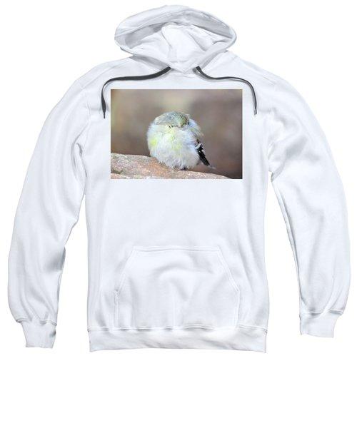 Little Sleeping Goldfinch Sweatshirt