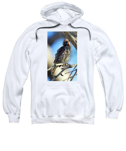 Lonchurea Sweatshirt
