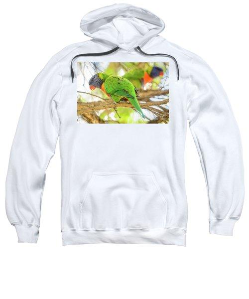 Lorrikeets 02 Sweatshirt