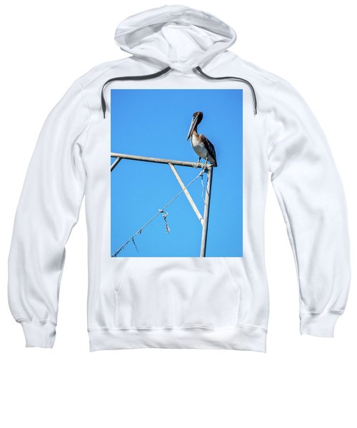 Louisiana's State Bird Sweatshirt