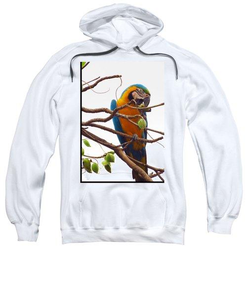 Macaw  Sweatshirt