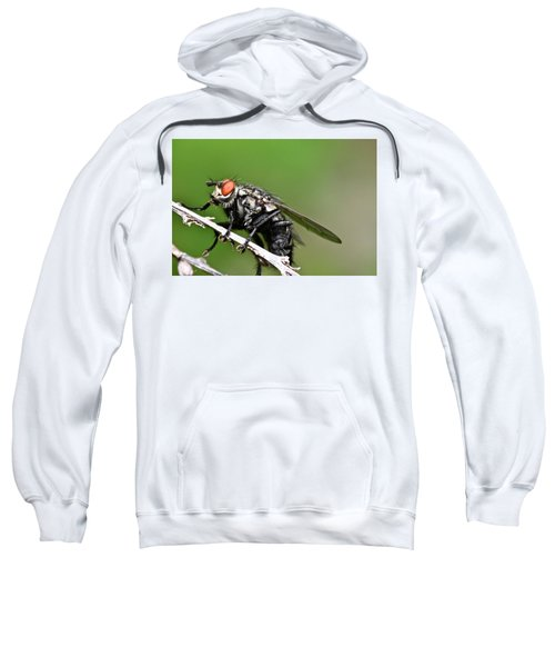 Macro Fly Sweatshirt
