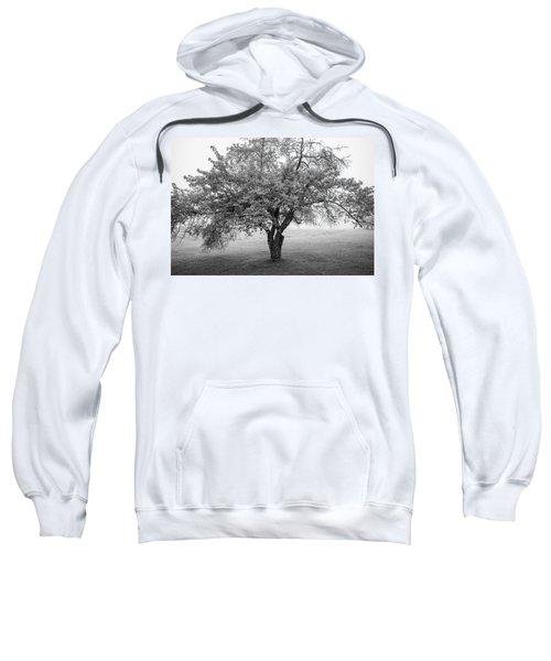Maine Apple Tree In Fog Sweatshirt
