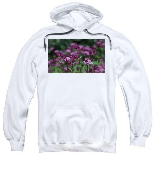 Majestic Magenta Sweatshirt