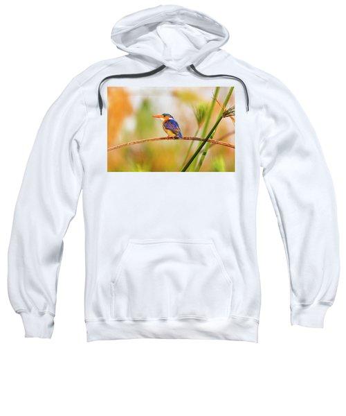Malachite Kingfisher Hunting Sweatshirt