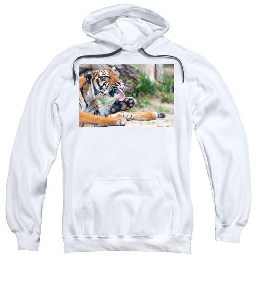 Malayan Tiger Grooming Sweatshirt