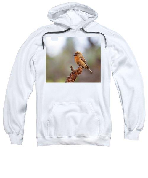 Male Red Crossbill Sweatshirt