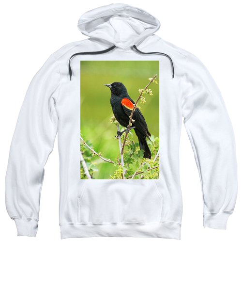 Male Red-winged Blackbird Sweatshirt