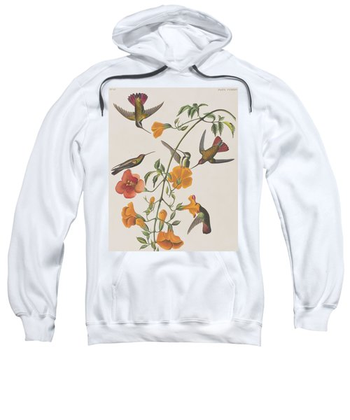 Mango Humming Bird Sweatshirt by John James Audubon