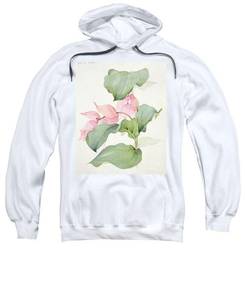 Medinilla Magnifica Sweatshirt