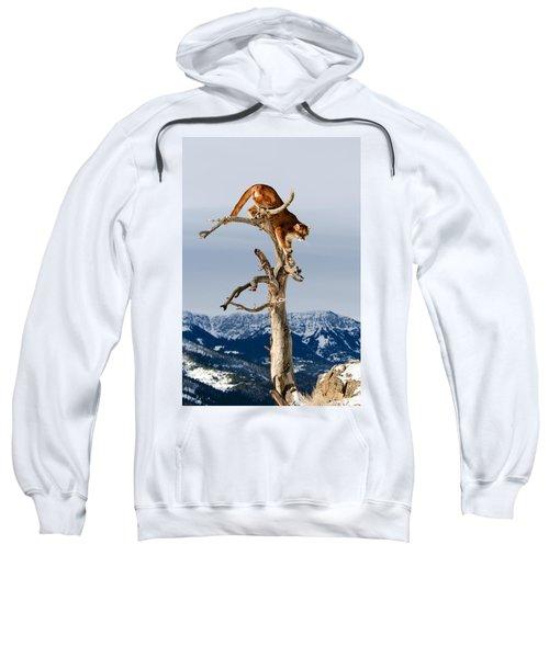 Mountain Lion In Tree Sweatshirt