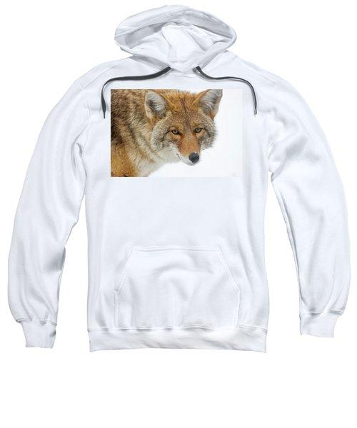 Mr. Coyote Sweatshirt
