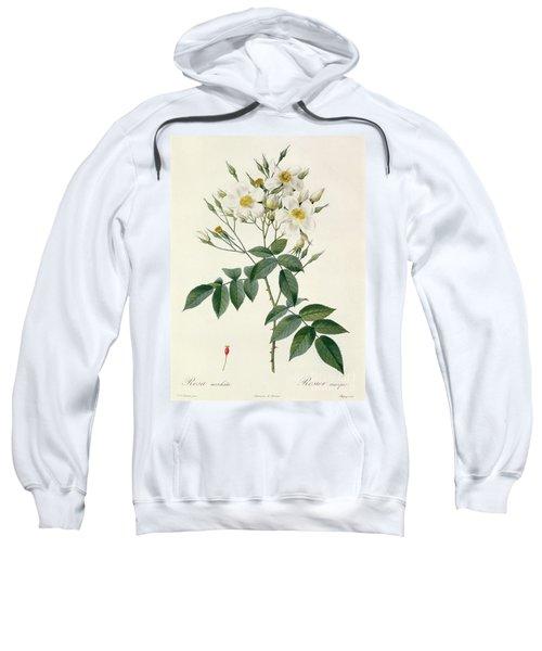 Musk Rose Sweatshirt