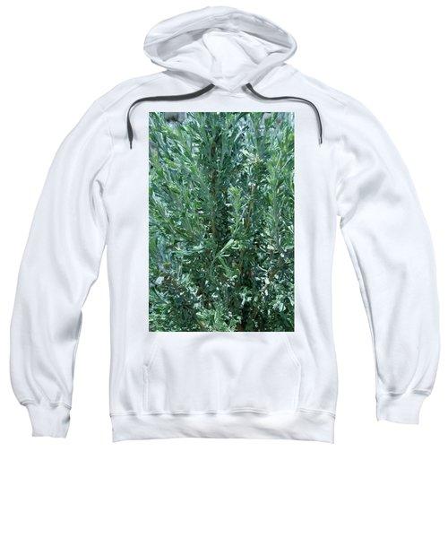 New Sage Sweatshirt