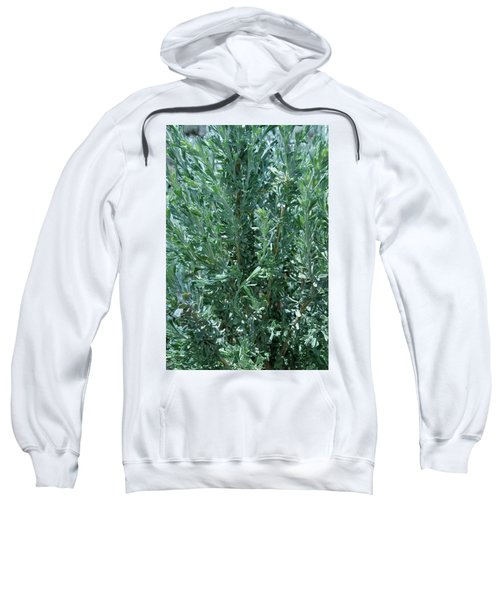 New Sage Sweatshirt