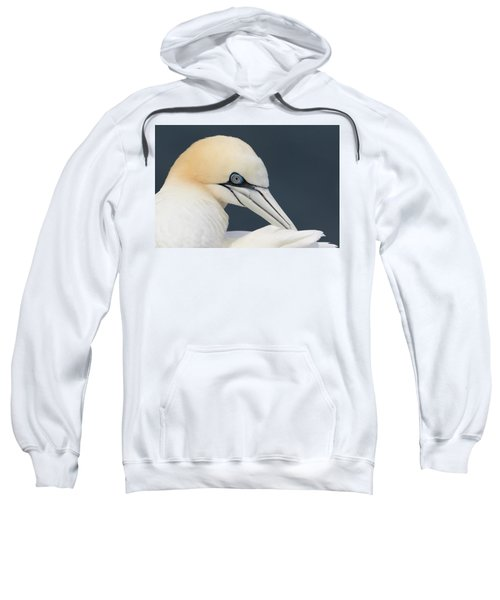 Northern Gannet At Troup Head - Scotland Sweatshirt