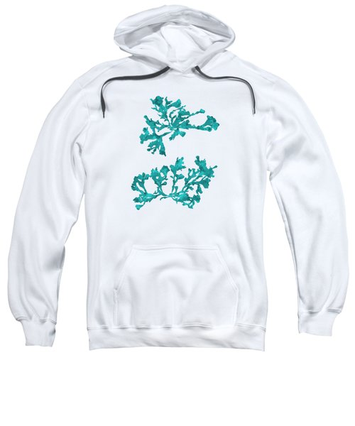 Sweatshirt featuring the mixed media Ocean Seaweed Plant Art Phyllophora Rubens by Christina Rollo
