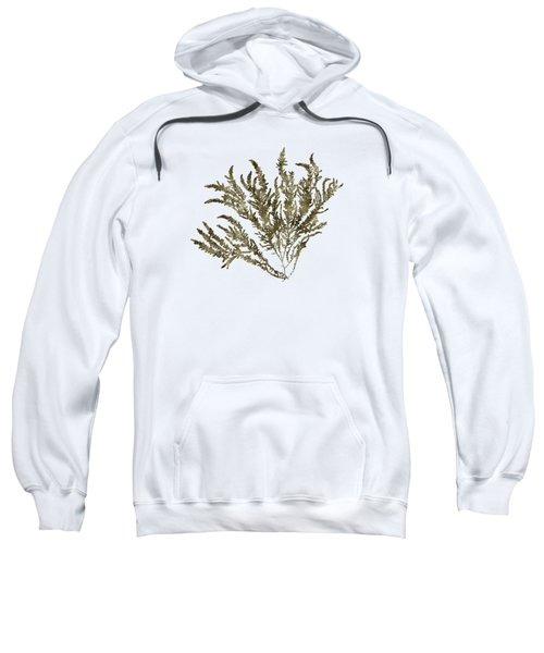 Sweatshirt featuring the mixed media Ocean Seaweed Plant Art Ptilota Sericea Square by Christina Rollo
