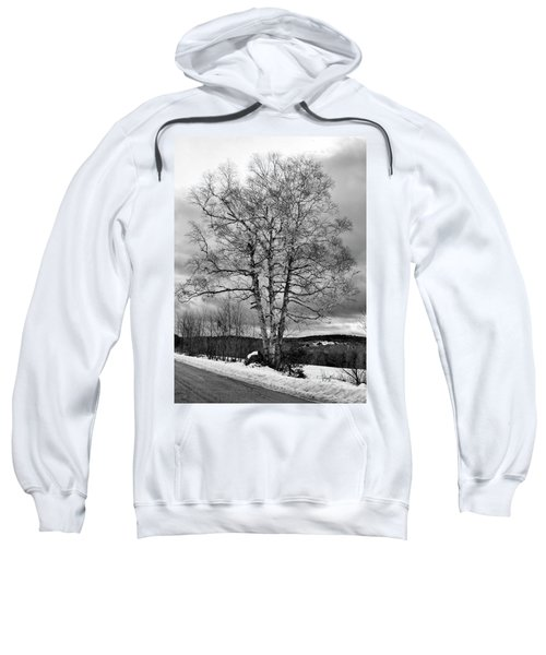 Old White Birch Sweatshirt