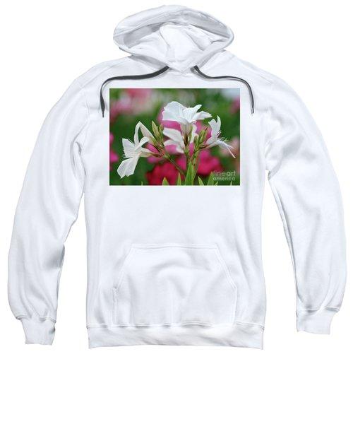 Oleander Casablanca 1 Sweatshirt