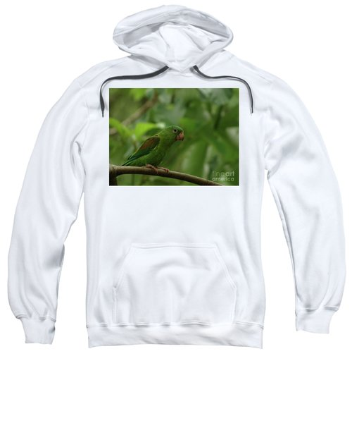 Orange-chinned Parakeet  Sweatshirt