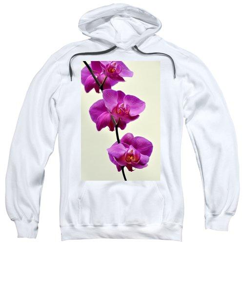 Orchid 26 Sweatshirt