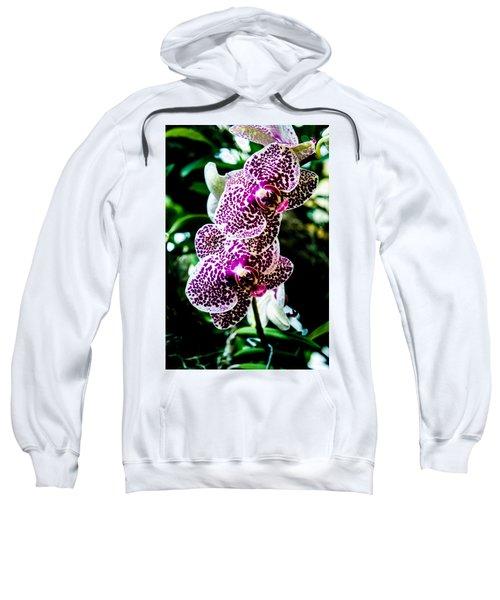Orchid - Pla236 Sweatshirt
