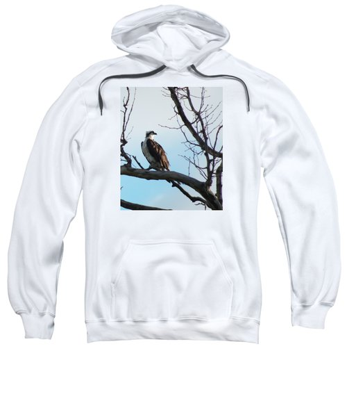 Osprey In Tree Sweatshirt