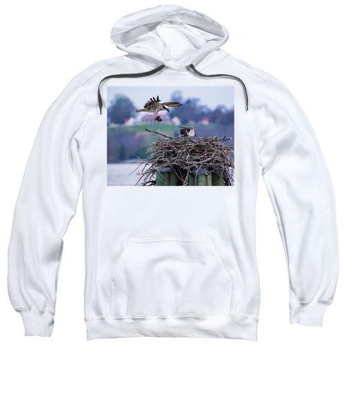 Osprey Nest Building Sweatshirt