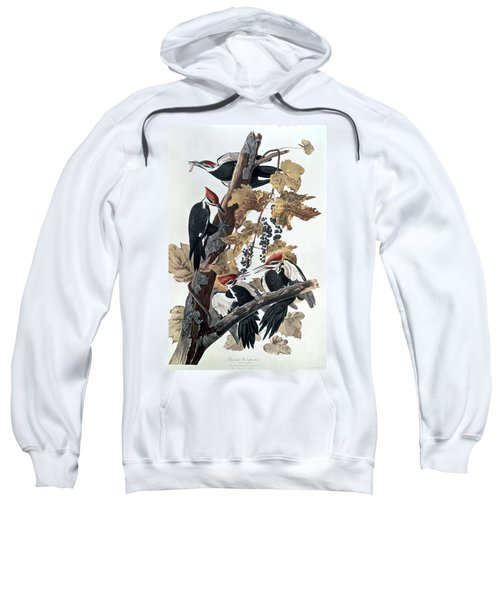 Pileated Woodpeckers Sweatshirt